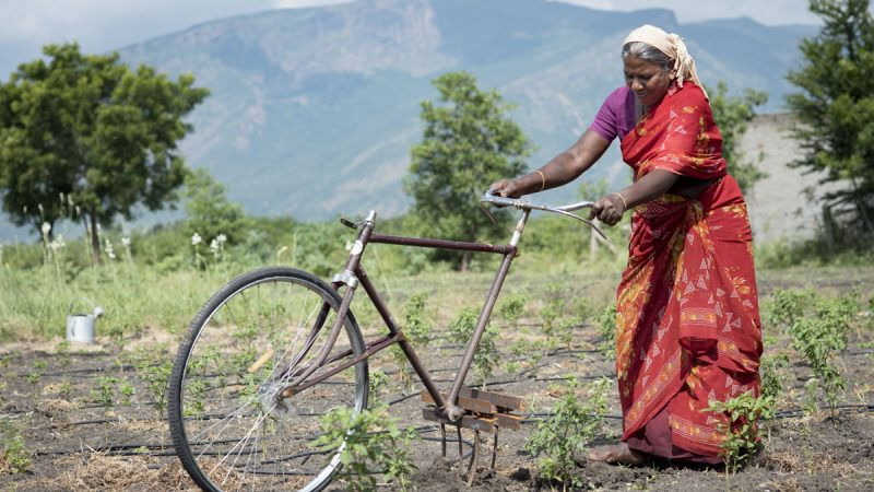 Christian Aid – Eco Veg Project